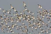 Seagulls latania — Zdjęcie stockowe
