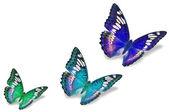 色彩艳丽的蝴蝶 — 图库照片