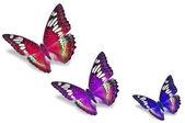 Barevné motýly — Stock fotografie