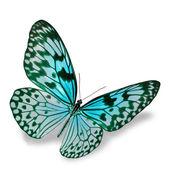 Mariposa azul — Foto de Stock
