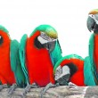 Stock Photo: Beautiful macaw
