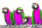 Beautiful macaw — Stock Photo