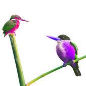遇到的翠鸟鸟 — 图库照片