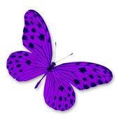 Farfalla viola — Foto Stock