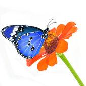 бабочка на цветке — Стоковое фото