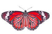 Rode vlinder — Stockfoto