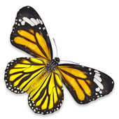 Gele vlinder — Stockfoto