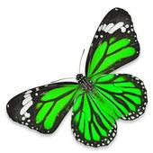 Grön fjäril — Stockfoto