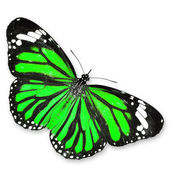 Groene vlinder — Stockfoto
