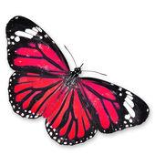 Röd fjäril — Stockfoto