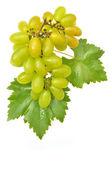 Uva verde — Foto Stock
