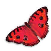 Mariposa roja — Foto de Stock