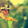 Stock Photo: Vintage butterfly