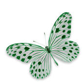 White and Green butterfly — Stok fotoğraf
