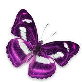 Paarse vlinder — Stockfoto