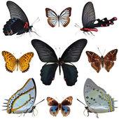 Vlinder-collectie — Stockfoto