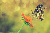 Vintage butterfly — Stock Photo