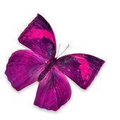 Rosa fjäril — Stockfoto