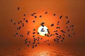 Vogel met het vliegen — Stockfoto