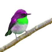 Krásný pták — Stock fotografie
