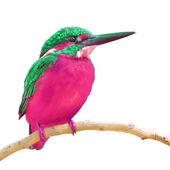 Společné ledňáček pták — Stock fotografie