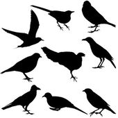 Silhouettes of birds — Stock Photo