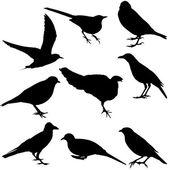 Silhouettes of birds — Foto de Stock