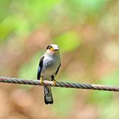 Bel oiseau — Photo