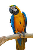 Beautiful macaw — Stock Photo
