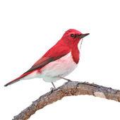 Colorful bird — Stock Photo