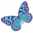 Pink and blue butterfly — Stock Photo