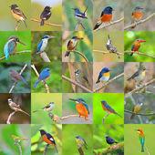 Sada ptáků — Stock fotografie