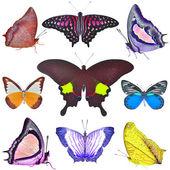 Schmetterlinge-sammlung — Stockfoto