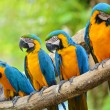 Macaw — Stock Photo #41629889