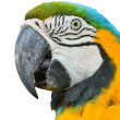 Macaw — Stock Photo #41630147