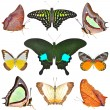 Butterflies collection — Stock Photo #41630183