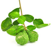Kaffir Lime — Stock Photo