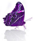 Prachtige vlinder — Stockfoto