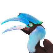 Head of hornbill — Stock Photo
