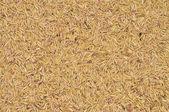 Unprocessed rice  — Stock Photo