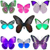 Collection of colored butterflies — Foto de Stock