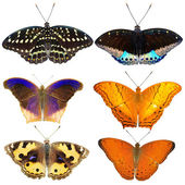 Butterfly collection — Stockfoto
