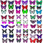 Collection of colorful butterflies — Foto de Stock