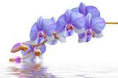 Flowers purple orchids — Stock Photo