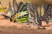 beautiful butterfly — Stock fotografie