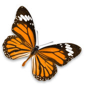Yellow-orange butterfly — Stock Photo