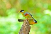 Zlatý pták — Stock fotografie
