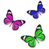 Butterflies isolated — Stock Photo