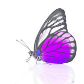 White and Purple Butterfly — Stockfoto
