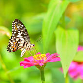 Butterfly on flower — ストック写真